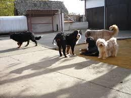 Psi na okupu